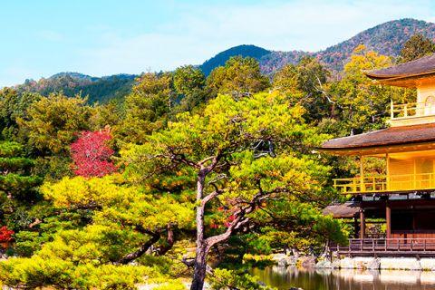 Japón al completo a tu aire